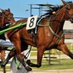 """Ippica: Iannuzzi (PD) chiede """"interventi normativi in tutti i contesti nei quali sono impiegati cavalli"""""""